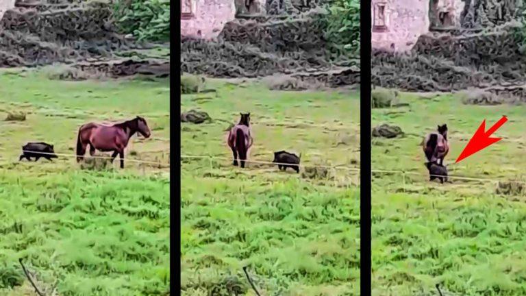 Tres momentos del vídeo del caballo y el jabalí.