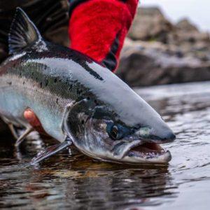 El pescador del campanu del río Sella recibirá un premio de 2.500 euros