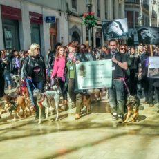La casta y los derechos de los animales