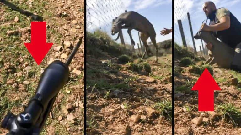 cazador salva corzo