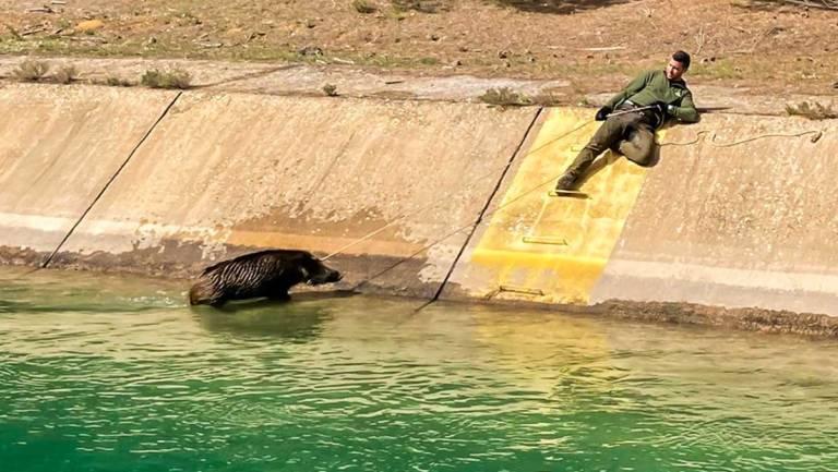 El cazador durante el rescate de un jabalí. © Facebook