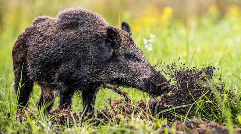 Los cazadores asturianos se plantan: dejarán de cazar si el Principado no los escucha