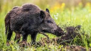 La Diputación de Valencia aprueba una moción a favor de la caza presentada por el PP