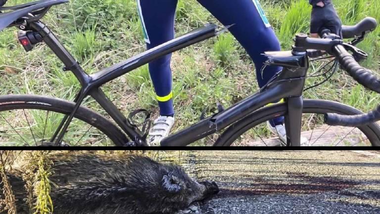 ciclista choca contra jabalí parte bicicleta