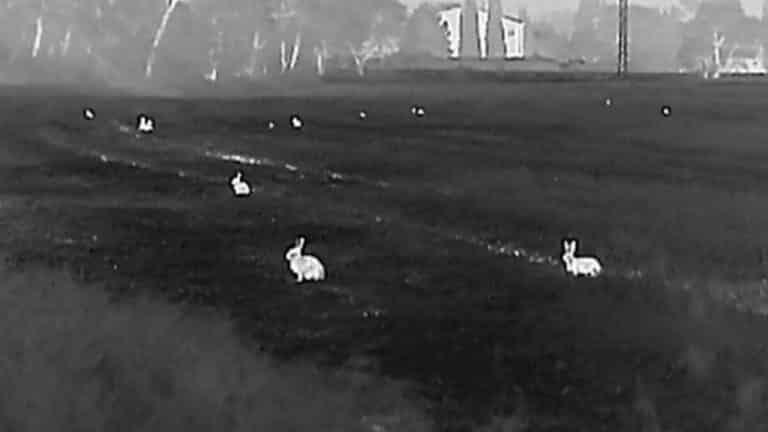 conejos monocular termico
