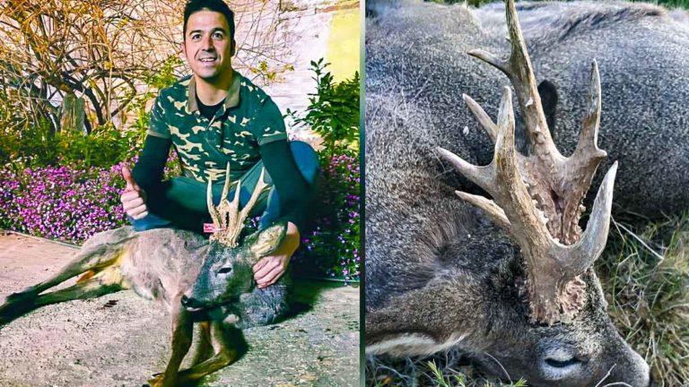 El corzo y el cazador