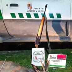 Caza un corzo, no le coloca el precinto y lo pillan: ahora podrían multarle con hasta 5.000 euros