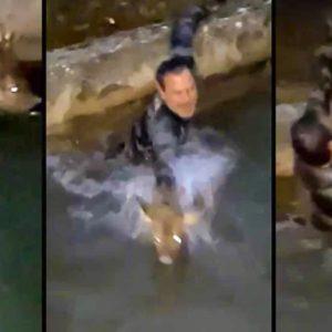Un cazador suelta el rifle y se tira a un canal para rescatar al corzo que intentaba cazar
