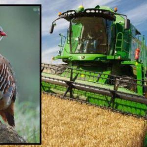 Un coto de caza prohíbe cosechar antes de julio durante tres años y este es el sorprendente resultado