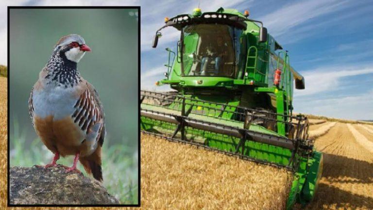 coto caza cosechar perdices