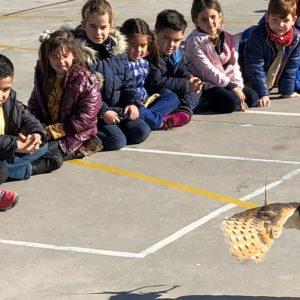 La FAC llevará la Cetrería a los colegios con el taller 'Vuela por la Naturaleza'