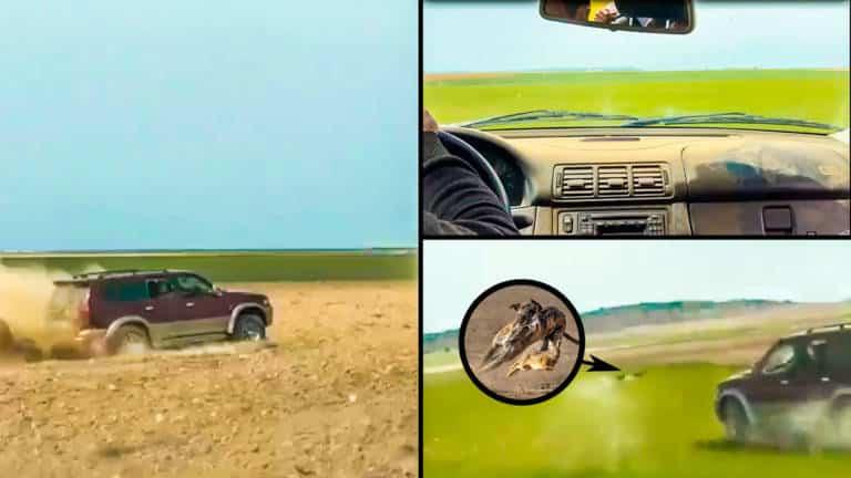 Varios instantes del vídeo en el que aparecen corriendo galgos. © YouTube