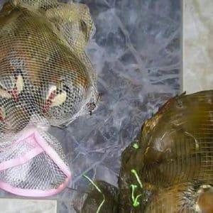 Juzgan por primera ve a una banda de furtivos que esquilmaba cotos de perdiz roja con redes en Cádiz