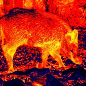 La federación de caza alerta de que los cazadores están siendo multados por usar visión térmica en Albacete