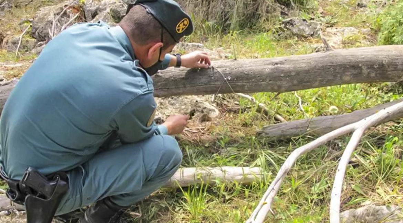 Dos investigados por colocar 36 lazos en los que cayeron cuatro zorros, tres perros y tres jabalíes