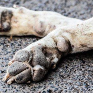 Los cazadores extremeños piden cárcel para 12 acusados de matar a 41 perros