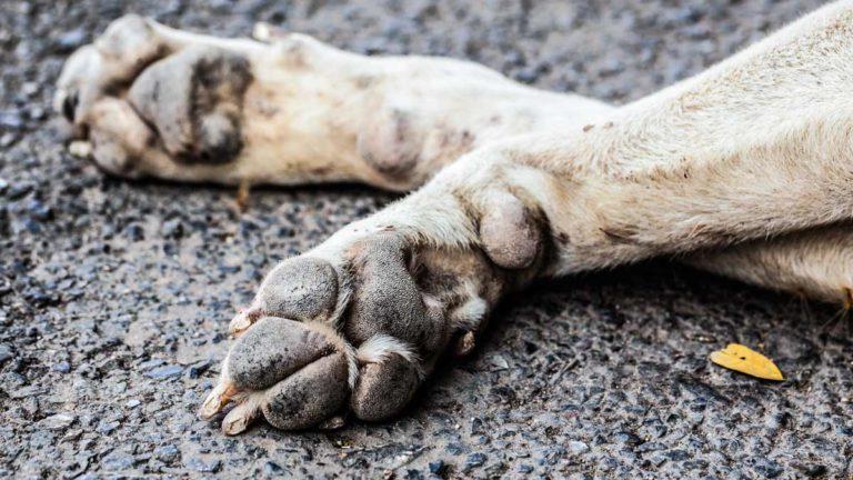 Patas de un perro muerto. ©Shutterstock