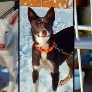 Un cazador pide ayuda urgente para recuperar los tres perros de caza que le han robado