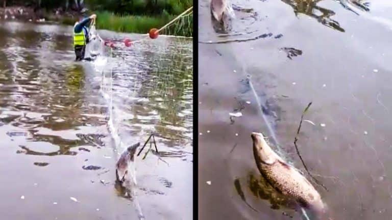 Tres momentos del vídeo del trasmallo en el Guadiana. © Facebook