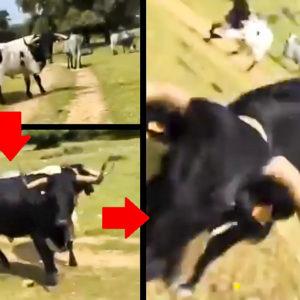 Un corredor se mete entre unas vacas por un camino rural y una de ellas le embiste