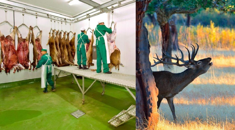 Asiccaza pide ayudas para el sector de la carne de caza por la crisis de la Covid-19