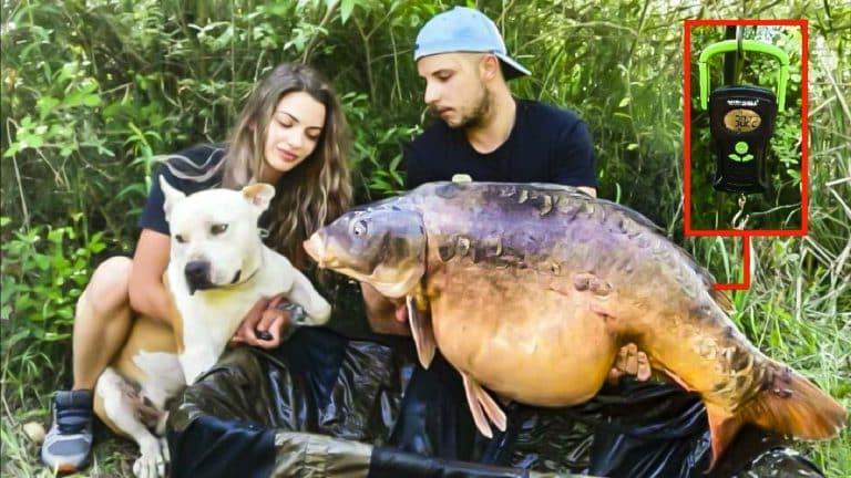 carpa royal 30 kilos guadiana