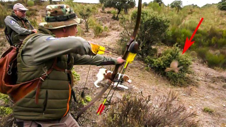 Cazando perdices rojas con perro de muestra y arco.