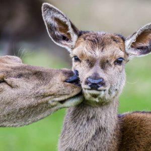 Los cazadores denunciarán ante la Fiscalía General del Estado la matanza de 40 animales en Monfragüe