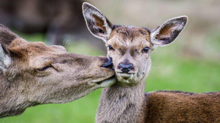 matanza animales Monfragüe