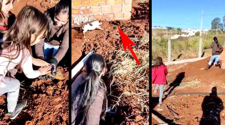 Una familia libera a una cobaya en apuros pero su perro rompe la magia del momento