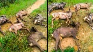 Un cazador descubre cinco corzos muertos en 10 minutos y denuncia la triste realidad de muchos cotos