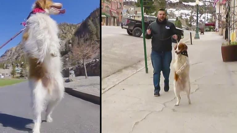 Dexter perro patas