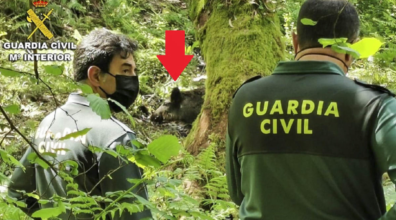 Los cazadores alertan a la Guardia Civil de un lazo colocado por furtivos para capturar jabalíes