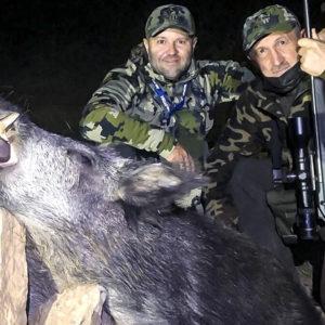 Caza un jabalí con el que soñaría cualquier cazador en una espera por daños