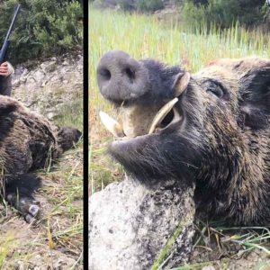 Un joven de 17 años caza un enorme jabalí de 131 kilos en una espera por daños en Huesca