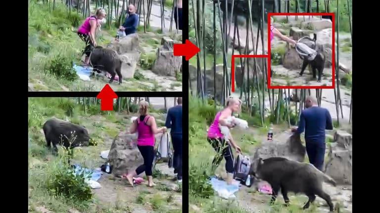 mujer atacada por el jabalí