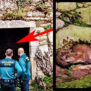 Este es el vídeo del lobo que entró en una casa de un pueblo de Galicia