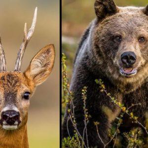 Un cazador de corzos se encuentra con dos osos en León