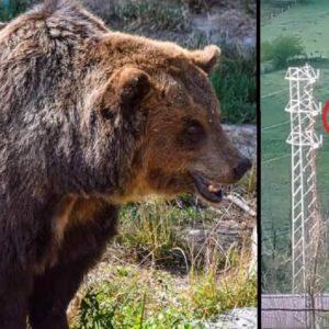 Graba desde su casa un oso deambulando por un pueblo de León