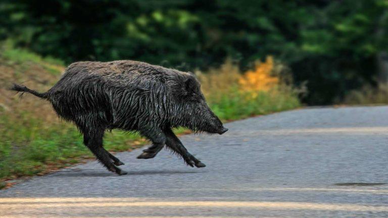 Paso de fauna en carretera.