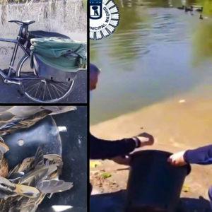 'Caza' 9 patos en la Casa de Campo y lo pillan huyendo con ellos en bici por la M-30