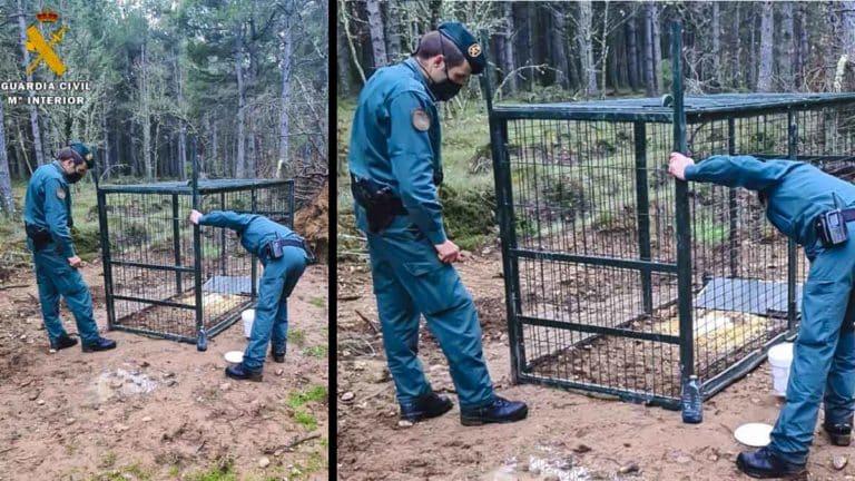 jaula trampa furtivos caza mayor