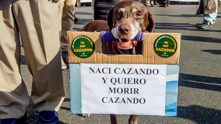 Perro 'reivindicando' su derecho a cazar junto a su dueño en la última manifestación de cazadores de septiembre de 2017 en Córdoba. /Jara y Sedal