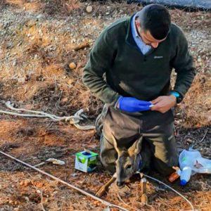 Nueva lección de ecologismo de este cazador: salva a dos corzos y un jabalí de morir ahogados
