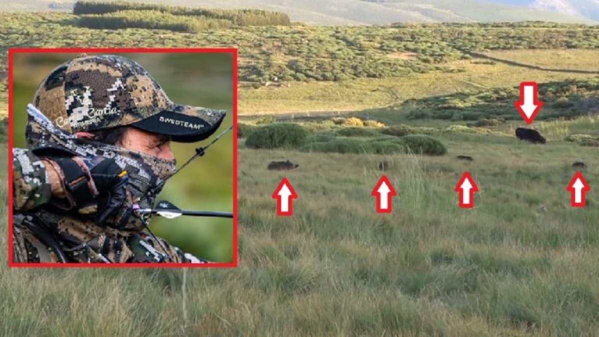 Increíble lance de caza con arco a un jabalí que se había colado entre las vacas