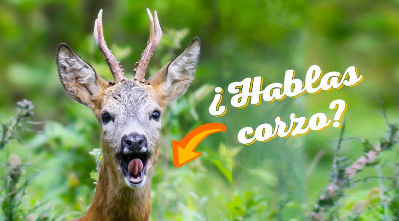 10 términos del argot del corzo que todo cazador debe conocer