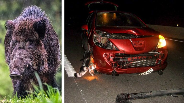 Estado del vehículo tras el accidente. © C. M.