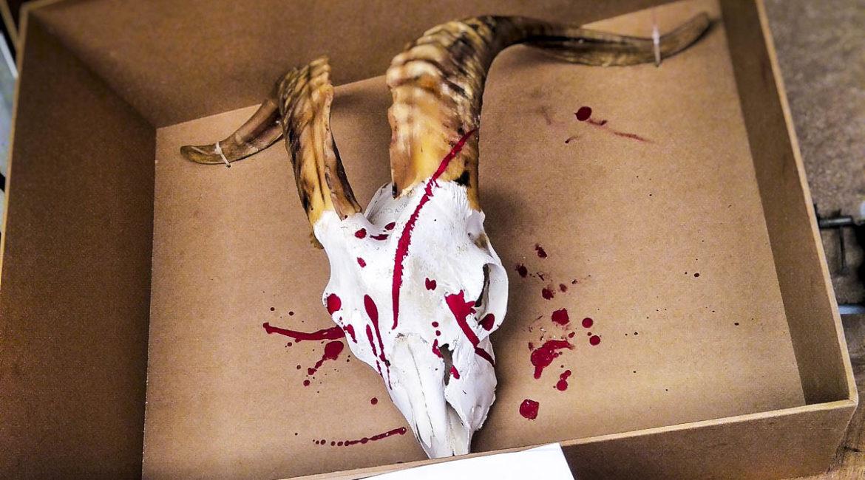 La RFEC condena las amenazas a Luis Planas y exige que no criminalice a los cazadores