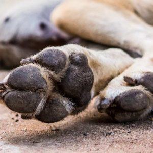 Condenada una animalista que dejó morir de hambre y sed a 13 perros en Sevilla