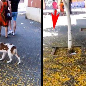 Un cachorro de epagneul bretón hace una muestra a una paloma en el centro de Sevilla
